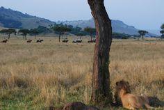 Horse riding safari in the Masai Mara, Kenya - Africa Geographic Safari, Kenya Africa, Horse Riding, Photo Galleries, To Go, Wildlife, African, Horses, Nature