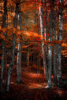 Superb Nature, tulipnight: Mystical Forest by Robin Stevens Mystical Forest, Tree Forest, Forest Scenery, Forest Path, Forest Floor, Autumn Forest, Dark Forest, Château Fort, Autumn Scenes