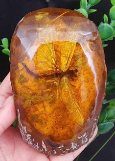 history of dinosaurs Dragonfly in amber Cool Rocks, Beautiful Rocks, Minerals And Gemstones, Rocks And Minerals, Dinosaur History, Amber Fossils, Dragonfly In Amber, Prehistoric Animals, Mineral Stone