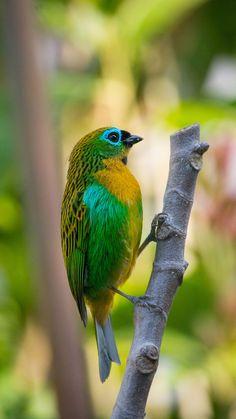 Most Beautiful Birds, Pretty Birds, Love Birds, Animals Beautiful, Cute Animals, Exotic Birds, Colorful Birds, Nature Pictures, Animal Pictures