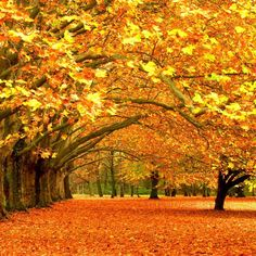 Orange and yellow fall trees