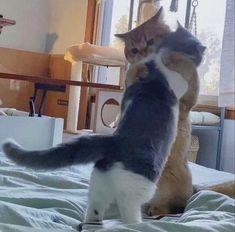 Cats, Animals Photos, Gatos, Cat, Kitty, Kitty Cats