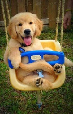 I may be a puppy but who says I can't go on the swing?