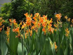 Add Height to Your Garden With These Towering Perennials | HGTV