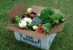 A CSA Box in Early July