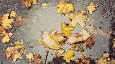 A quiet autumn rain…