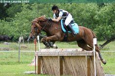 Finnhorse gelding Tähti Ohjus Mane N Tail, Draft Horses, Horse Breeds, Coaching, Animals, Inspiration, Horses, Training, Biblical Inspiration