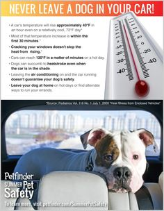 Never Leave a Dog in Your Car - Petfinder