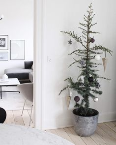 A cute and sustainable Christmas tree idea Sustainable Christmas decor, natural potted Christmas tre