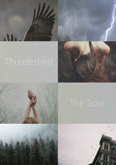 Ilvermorny: Thunderbird... Intelligent yet temperamental, Chadwick Boot named his house after the Thunderbird; a create of storm and sky whose wings create sparks as it flies through the sky.
