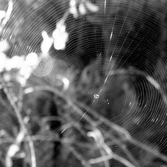 #spider #web #spiderweb #bwphoto #photoart #photo #lomo #lomography #forest #summer #life #wild #wildlife #biology #insect #fauna