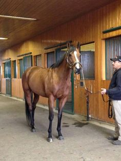 Palace posing at Spendthrift Farm