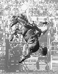 Larry Mahan rodeo | Larry Mahan Rodeo Cowboys, Real Cowboys, Bucking Bulls, Rodeo Life, Charro, Bull Riders, Cowboy And Cowgirl, Horse Pictures, Horse Girl