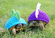 These two just made my life happy...aubrey you must make these and we must go turtle hunting!!!!!