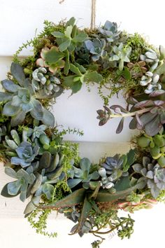 Learn how to turn succulent cuttings into this beautiful succulent wreath. Display this living wreath on a wall or even used as a table centerpiece. Succulent Cuttings, Succulent Bouquet, Succulent Gardening, Succulent Terrarium, Planting Succulents, Succulent Ideas, Pumpkin Arrangements, Succulent Arrangements, Floral Arrangements