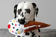 """I Scream, You Scream, We All Scream for Ice Cream!"" This DIY squeaky softie stuffed ice cream cone dog toy is tons of fun! Dog Cone, Diy Dog Toys, Puppy Dog Eyes, Training Your Puppy, Homemade Dog, Diy Stuffed Animals, Dog Supplies, Humane Society, Dog Friends"