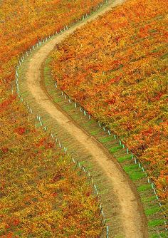Autumn colors, Douro valley, Portugal