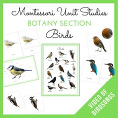 MMH - Montessori Unit Studies Birds Botany Section Montessori Activities, Learning Activities, Kids Learning, Spring Activities, Hands On Activities, Japanese To English, Living And Nonliving, Dot Letters, Sequencing Cards