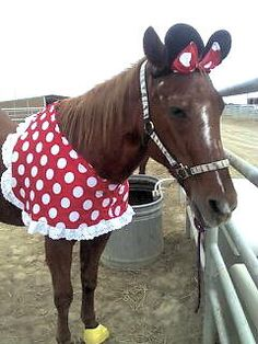 Minnie Mouse Halloween Costume for Horse | eBay Look at the Yellow Shoes on her hooves!!