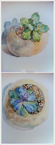two cacti in watercolour