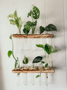 Plant Wall, Plant Decor, Test Tube Crafts, Hanging Glass Planters, Polymer Clay Embroidery, Plant Crafts, Hydroponic Plants, Inside Plants, Plant Aesthetic