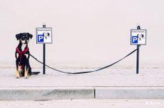 © Blende, Holger Martens, der geparkte Hund