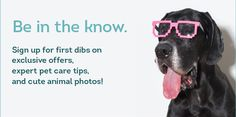 Our Complete Guide to Roadtripping With Your Pooch   DogVacay Official Blog