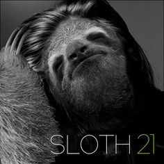 Hilarious Mashup Reimagines Sloths on Famous Album Covers - My Modern Met