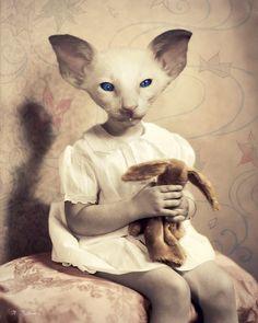 "Cat Art Print, Siamese Kitten, Mixed Media Collage, Pink, Nursery Decor, Vintage Portrait, Anthropomorphic, Pet Lover, Baby, ""Sugarplum"""