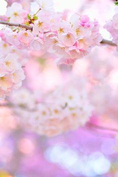 Cherry Blossom Pale Gradient by simzcom on deviantART