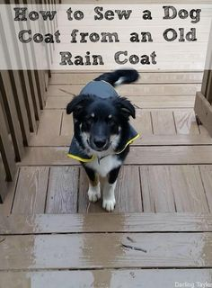 Need a dog coat?  Grab an old jacket and follow this tutorial for an easy DIY dog coat