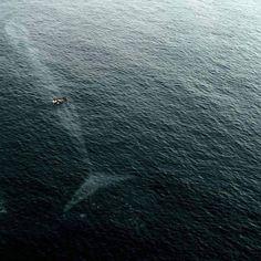 Big whale.