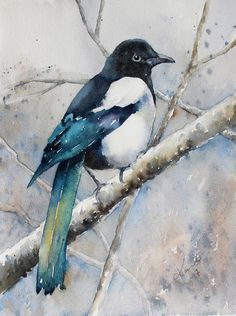 Karin | Bird: Magpie | I use Winsor Newtons Artists' watercolors and Daniel Smith's extra fine watercolors. The paper I use is 140lb 300 grams Arches rough or...