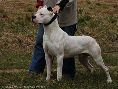OUR MALES Group Of Dogs, Dog Groups, Dogo Argentino Dog, Scary Dogs, Hunting Dogs, Working Dogs, Best Dogs, Dog Breeds, Dogs And Puppies