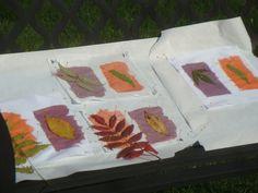 Inkodye and SolarFast sampling by students at Sievers School of Fiber Arts on Washington Island, Wisconsin, US