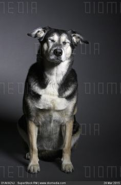 Dog with its eyes closed - stock photo