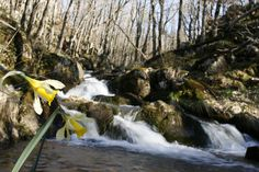 La cascade d'Agen d'Aveyron
