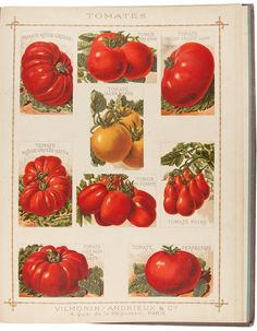 C1890 VILMORIN. 1. Tomate rouge grosse 2. Tomate pomme rouge. 3. Tomate rouge grosse lisse (T. Trophy). 4. Tomate jaune rouge. 5. Tomate rouge grosse hative. 6. Tomate Roi Humbert. 7. Tomate poire. 8. Tomate a tige raide de laye. 9. Tomate Perfection.