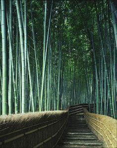 Tenryuji temple, Kyoto - bamboo garden