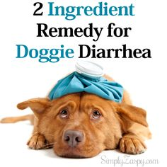 2 Ingredient Remedy for Dog Diarrhea |1 part – 50% cooked lean ground turkey 1 part – mashed sweet potato (or you can use 100% pure pumpkin puree) (example: 2 cups – 50% cooked turkey & 2 cups – mashed sweet potatoes)