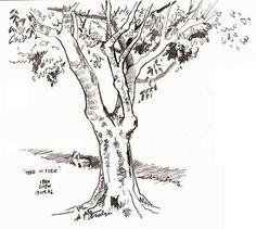 Tree in Park (19 Apr 2006)