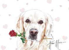 Single Large Luxury Cockapoo Mothers Day//Birthday Card Dog RR