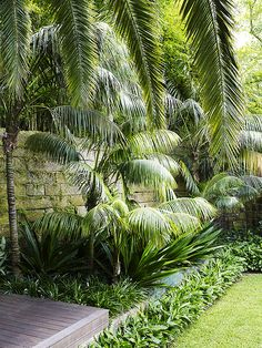 Mixed planting in garden bed 1 is part of Tropical garden Beds - dangargroup com Tropical Garden Design, Tropical Backyard, Tropical Landscaping, Garden Landscape Design, Backyard Landscaping, Palm Trees Landscaping, Tropical Gardens, Balinese Garden, Contemporary Landscape