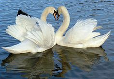 swanlake hindu personals Bill schoppert, actor: (1992) and the personals (1982) he has been married to  wendy frvehan since september 2 1984 wildrose timo maki 1983 swan lake.