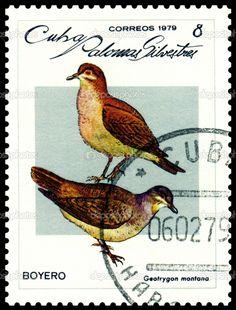 bird stamps | Vintage postage stamp. Geotrygon montana. | Stock Photo © Sergey ...
