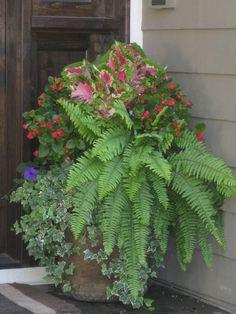 Shade planter, ferns, coleus, begonias
