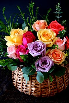 nuance color roses