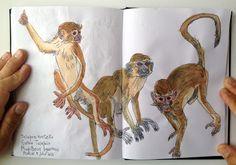 RICHARD CÂMARA: Sketchbook work