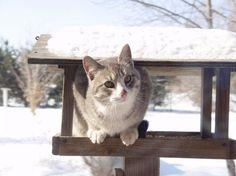 Cat in bird feeder