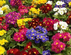 Como plantar um jardim de flores